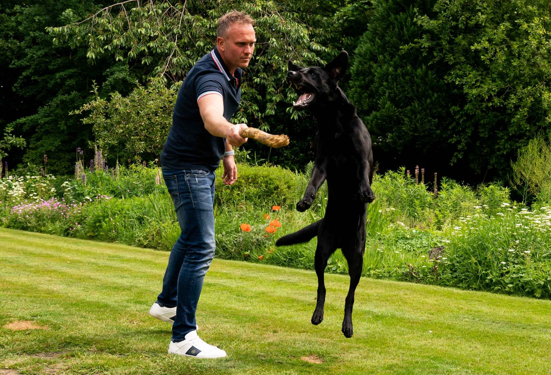 A dog leaps for a stick held by its owner